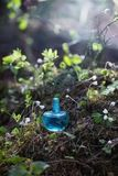 Magic potion on bottle in forest. Magic potion on blue bottle in forest stock image