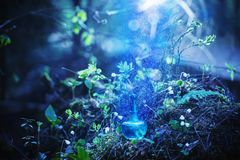 Magic potion on bottle in forest. Magic potion on blue bottle in forest royalty free stock images