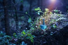 Magic potion on bottle in forest. The magic potion on bottle in forest royalty free stock photography