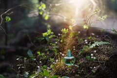 Magic potion on bottle in forest. The magic potion on bottle in forest royalty free stock photo