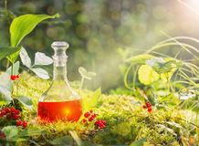 Magic potion in bottle in forest. The magic potion in bottle in forest royalty free stock photography