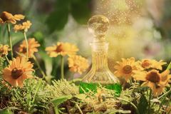 Magic potion in bottle in forest. The magic potion in bottle in forest stock photo