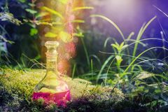 Magic potion in bottle in forest. The magic potion in bottle in forest royalty free stock images