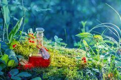 Magic potion in bottle in forest. The magic potion in bottle in forest stock photography