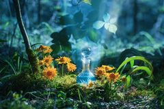 Magic potion in bottle in forest. The magic potion in bottle in forest royalty free stock photos