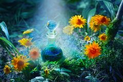 Magic potion in bottle in forest. The magic potion in bottle in forest stock image