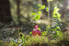 Magic potion on bottle in forest. Pink magic potion on bottle in forest royalty free stock photos