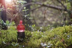 Magic potion on bottle in forest. Pink magic potion on bottle in forest stock photography