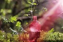 Magic potion on bottle in forest. Pink magic potion on bottle in forest stock photo