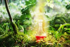 Magic potion in bottle in forest. Magic potion in bottle in sunny forest stock image