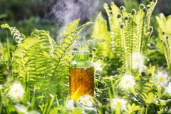 Magic potion in bottle outdoor. The magic potion in bottle outdoor royalty free stock photo