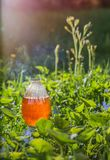 Magic potion in bottle outdoor. The magic potion in bottle outdoor stock photography