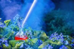 Magic potion in bottle outdoor. The magic potion in bottle outdoor stock images