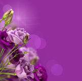 Magic purple flowers. With a copy  space Royalty Free Stock Image