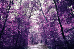 Magic purple forest, covert in mystical lilac colour Stock Photo