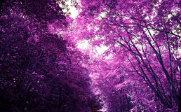 Magic purple forest, covert in mystical lilac colour Stock Images