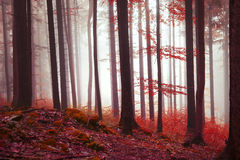 Magic red colored forest Stock Photos