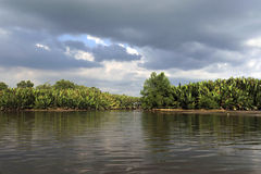 Magic river and forest. With dark clouds and reflection in the afternoon,located in weston  mangrove forest, malaysia Royalty Free Stock Photos