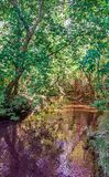Magic river in the forest royalty free stock photography