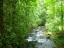 Magic river  in Guapiles, Limón , Costa Rica. Rainforest Stock Photo