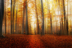 Magic Road in the Autumn Forest Royalty Free Stock Image