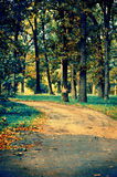 Magic road in the autumn park Royalty Free Stock Images