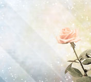 Magic rose Stock Photo