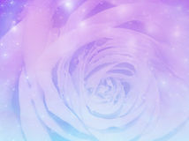 Magic rose background Stock Photos