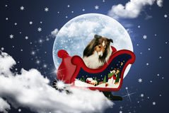Magic Sleigh Sheltie Royalty Free Stock Photography