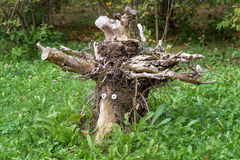 Magic Snag or Root on Green Grass Royalty Free Stock Photography