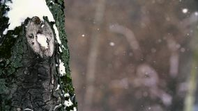 Magic snow flies up like ashes stock footage