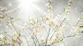 Magic spring. Apple tree in bloom over mystic background like a concept of magic spring Royalty Free Stock Photos