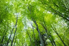 Magic spring forest Royalty Free Stock Image