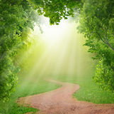 Magic spring forest Stock Photography