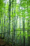 Magic spring forest Stock Images