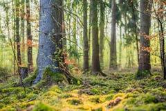Magic Spring Forest Stock Photos