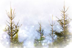Magic spruces. Abstract illustration of moravian forest with bokeh effect Royalty Free Stock Images
