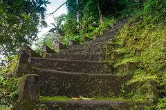 Magic stone steps going a long way up into a tunnel of freshly green dense forest. royalty free stock photography