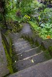Magic stone steps going a long way up into a tunnel of freshly green dense forest. stock photography