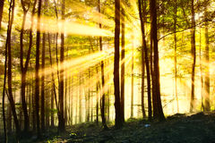 Magic sunny forest Royalty Free Stock Photos