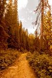 Magic sunrise on a forest road. Karpaty, Ukraine. Royalty Free Stock Photos