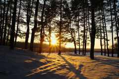 Magic sunrise in the  forest Royalty Free Stock Photos