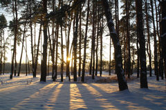Magic sunrise in the snowy forest Stock Photo