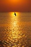 Magic sunset Royalty Free Stock Photography