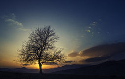 Magic Sunset. And lonely tree Royalty Free Stock Photography