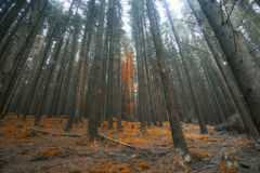 Magic surreal forest landscape, dreamy woods Stock Photography