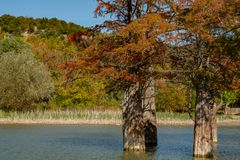 The magic of swamp cypress Taxodium distichum appears in the fall. The red and orange cypress needles are reflected in a turquoise royalty free stock photography