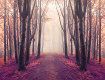 Magic symmetry trail into fairy tale foggy forest Stock Photo