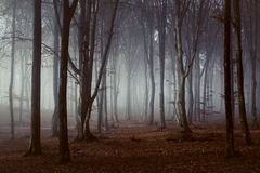 Magic trail in foggy forest. Gloomy dark autumn day. Filtered image Stock Photo