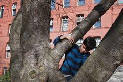 Magic Tree Stock Images